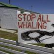 調査捕鯨に中止命令、中国では矛盾指摘の声も=中国版ツイッター