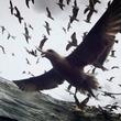世界の映画祭で話題騒然、海洋ドキュメンタリー『リヴァイアサン』公開決定