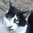 ごはんを食べながら「あうあうあー」……食事中につぶやく猫の気持ちは?