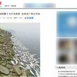 河南省のダム湖で魚数百トンが死ぬ 干ばつと過剰養殖による酸素不足が原因か=中国メディア