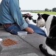 【猫】ニコニコ動画で大人気の「ネコ動画主」鉄板動画4選