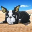 TVアニメ『ジョジョの奇妙な冒険 スターダストクルセイダース』第26話「「愚者」(ザ・フール)のイギーと「ゲブ神」のンドゥール その2」より先行場面カットが到着