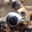 近づいたら「ワワワワワンッ」と吠えられた! 犬の興奮具合を見抜く方法とは?