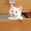 ついに「(´・ω・`)ショボーン」の顔をした正真正銘のネコが発見される!