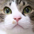 猫を飼うと統合失調症になる―3つの研究