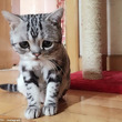 今度こそショボーン(´・ω・`)の顔をする「ネコ」が発見される