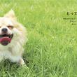 動物たちの笑顔で見る側も笑顔に! 『SMILE! 動物のかわいい笑顔の写真集』刊行