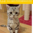 ついに(´・ω・`)ショボーンの顔の猫が発見される!
