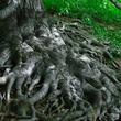 脳ミソもないのにどうして?驚くべき植物のサヴァイヴァル力