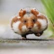 小さくてもモフモフ!今注目したいのは、予想外にかわいいハムスター!