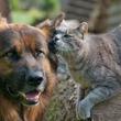犬派も猫派もニヤニヤ!たまらなくカワイイ犬猫画像22選(*´ω`*)