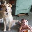 見ているだけで幸せになれる♪ワンコと赤ちゃんの最強コンビ21選(*´ω`*)