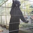 ヒグマを間近に観察できる! 東武動物公園の新クマ舎オープン!