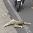 ナマケモノがゆっくりと道路を横断!可愛いけどとんでもなく遅い!!【動画】