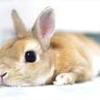 うさみみからおしりまで! モフ&モキュなウサギの世界 | うさぎしんぼる展(会期延長)