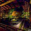 樹齢400年の松と共演!曼殊院門跡の紅葉ライトアップ