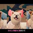 """【モフモフ動画】犬派に朗報! """"MOFU MOFU☆DOGS""""デビュー曲が11月1日""""犬の日""""の11時1分に公開"""