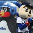 【プロ野球】【つば九郎&ドアラ銭闘物語】スターマスコット・つば九郎とドアラの年俸の推移をまとめてみた!