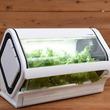 自宅で葉野菜を育ててみませんか? 沖縄セルラー、「スマホ対応水耕栽培キット」発売