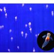 1000匹の「流氷の妖精 クリオネ」が舞う!   クリオネリウム2017