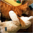 トラ猫と三毛猫、どちらが好き?