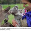カンガルーとコアラがキスでお祝い! ハッピーオーストラリアデイ