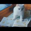 2匹の猫がこっそり勉強している理由は… 肉球文字の通信講座「ユーニャン」が可愛くて心温まる