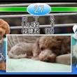【わんこVSぬこ】アニマルビデオ頂上決戦!【人気投票】 #ユーザー記者