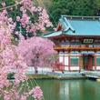 山を下りれば箕面グルメも充実!薄紅の桜が美しい勝尾寺