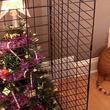 頭をひねりすぎたペットからクリスマスツリーを守る方法