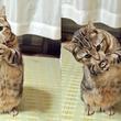 人間みたい?あざと可愛い猫のポーズに胸キュン!