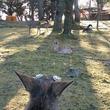 「鹿視点のシューティングゲーム」みたいな奈良公園での1枚