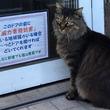 """愛称は「姐さん」!カフェの入口で""""業務妨害""""するメス猫が話題に"""