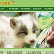SNSがきっかけで外国人に大人気! キツネと触れ合える珍しい動物園