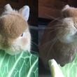 祖父が大事に育てた「キャベツ」を世界で一番よろこんで食べるウサギがめっちゃ可愛い!