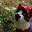 マリオが猫に!パロディ動画のクオリティが高すぎる!
