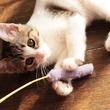 【麻布ペット】代々木公園店にネコちゃん専用のペットホテルルームを増設 ~空前の猫ブームを背景としたネコちゃんの預かり需要急増に対応~