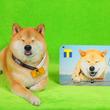 【枚方T-SITE】いぬフレ!×Tファンpresents 「柴犬まると一緒に、いぬと動物のことを語ろう!in 枚方T-SITE
