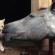 ぺろぺろぺろ・・・大好きな猫の毛づくろいをする馬がかわいかった!