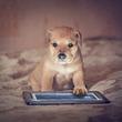 イヌ目線のクリエイティブで刺激的な動画制作を実現!! Crluo新機能「C-INU」サービススタート!