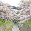 満開の桜を船から! 琵琶湖疏水観光船に乗って「三井寺」で楽しむ