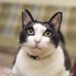 """[猫][写真術]「はっちゃん」の飼い主・八二一直伝!""""うちの子""""をかわいく撮るコツ"""