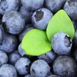 ブルーベリーが脳を守る!すぐれもの果物の効果を研究