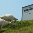 Amazon、ヤギによるエコ除草試験を開始! 岐阜県多治見市で実施