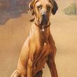 尿で延焼防ぎ飼い主助けた犬、第二次世界大戦中のあるエピソード。