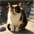フランス語で三毛猫は何と言いますか?