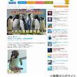 """シーパラ""""No.1イケペン""""決定、イワトビペンギンのログが46羽の頂点。"""