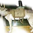 【画像】スターリンが実戦配備した究極の生体兵器「対戦車犬」の華麗なる戦歴