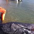 シャム双生児の未確認生物がメキシコ海岸に漂着「このような生き物は前例がない」