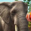 『Zoo Tycoon(ズータイクーン)』のXbox 360版が3月20日に発売決定 夢の動物園を作ろう